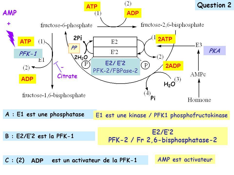 PFK-2 / Fr 2,6-bisphosphatase-2