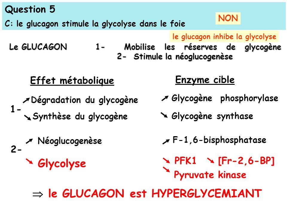  le GLUCAGON est HYPERGLYCEMIANT Glycolyse