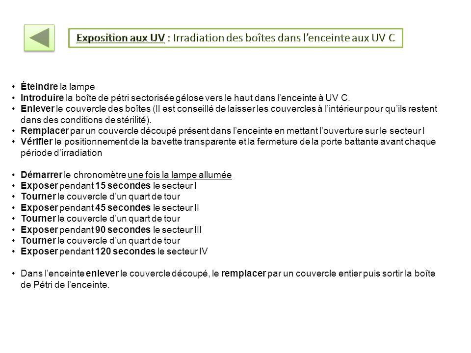 Exposition aux UV : Irradiation des boîtes dans l'enceinte aux UV C