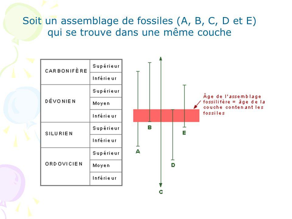 Soit un assemblage de fossiles (A, B, C, D et E)