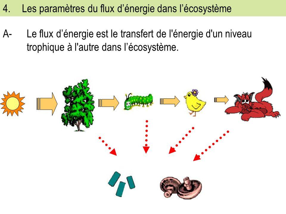 4. Les paramètres du flux d'énergie dans l'écosystème