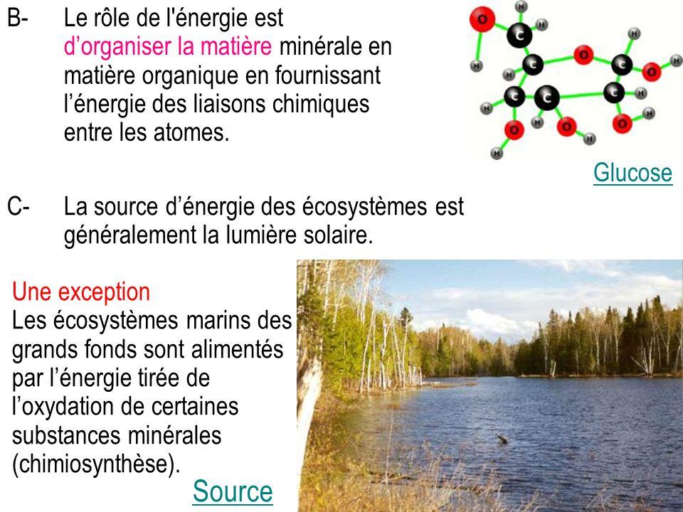 B- Le rôle de l énergie est d'organiser la matière minérale en matière organique en fournissant l'énergie des liaisons chimiques entre les atomes.