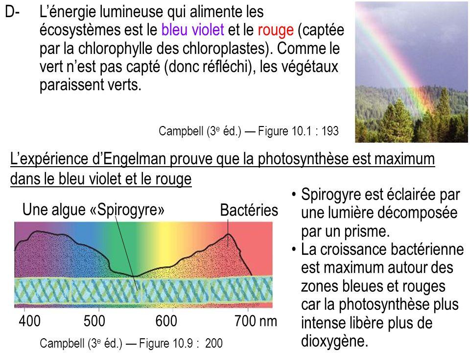 Spirogyre est éclairée par une lumière décomposée par un prisme.