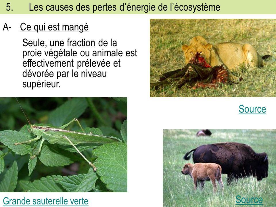 5. Les causes des pertes d'énergie de l'écosystème