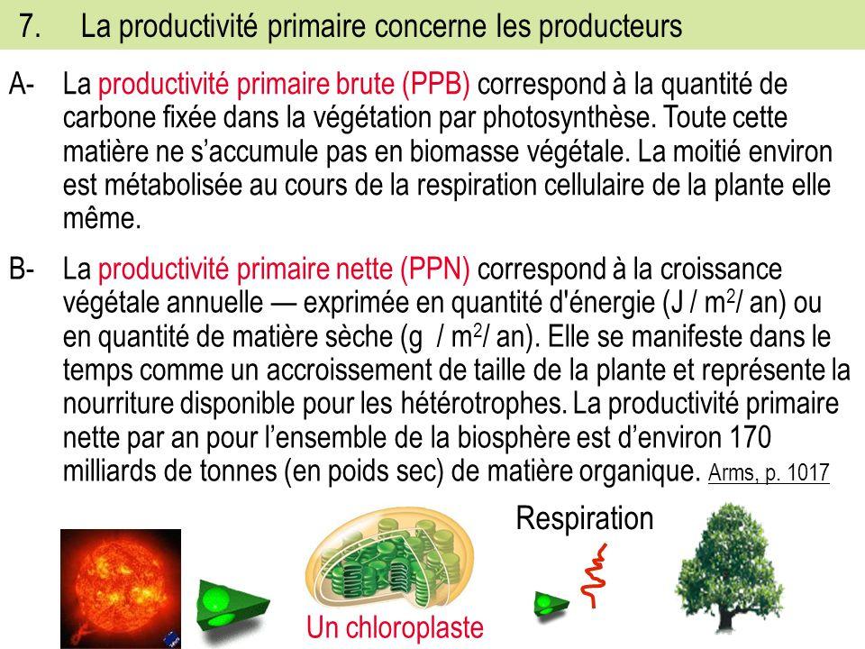 7. La productivité primaire concerne les producteurs