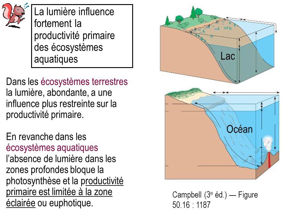 La lumière influence fortement la productivité primaire des écosystèmes aquatiques