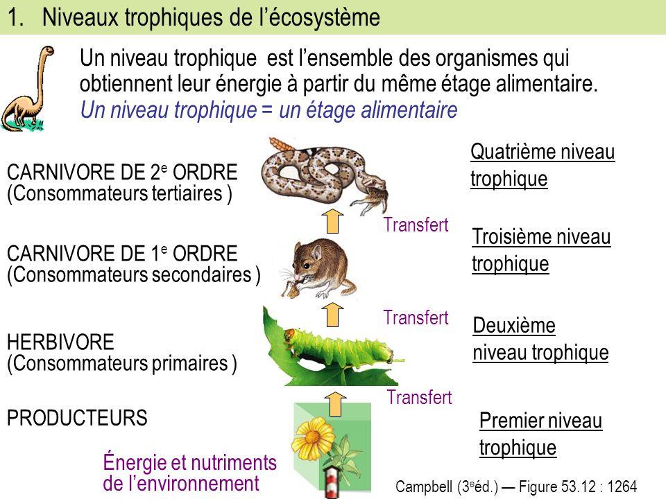 Niveaux trophiques de l'écosystème