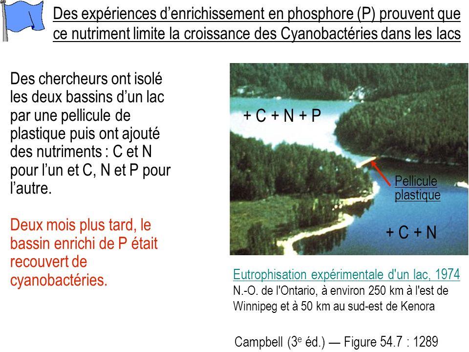 Des expériences d'enrichissement en phosphore (P) prouvent que ce nutriment limite la croissance des Cyanobactéries dans les lacs