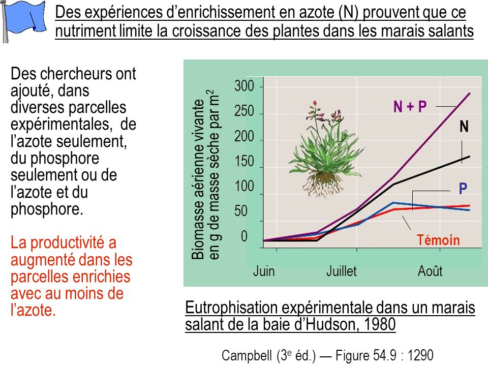 Des expériences d'enrichissement en azote (N) prouvent que ce nutriment limite la croissance des plantes dans les marais salants