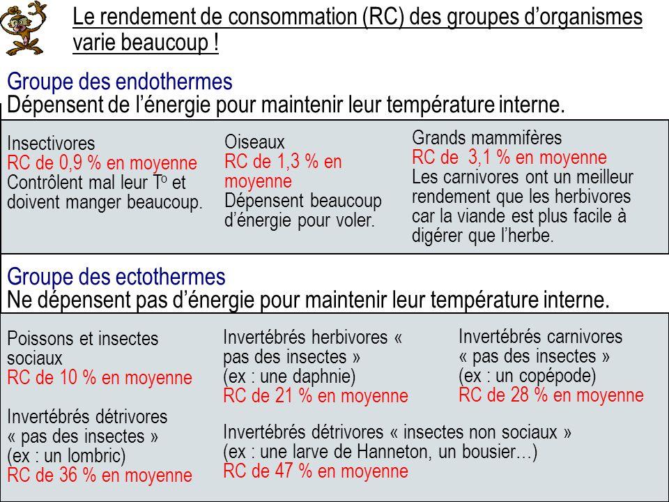 Groupe des endothermes