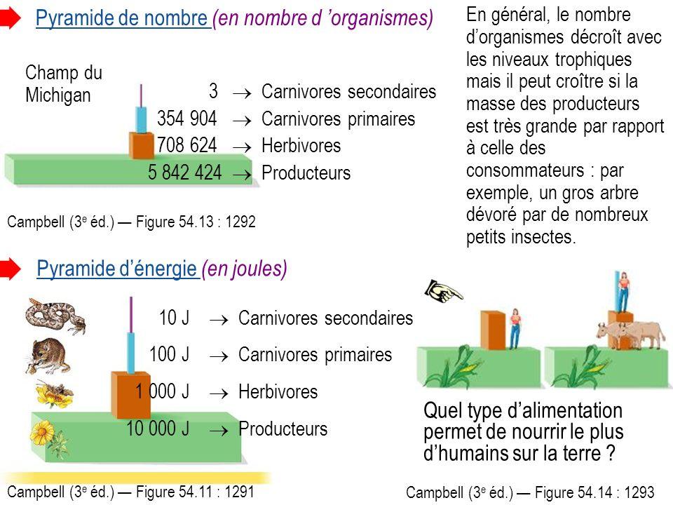 Pyramide de nombre (en nombre d 'organismes)