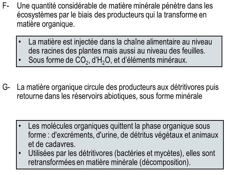 F- Une quantité considérable de matière minérale pénètre dans les écosystèmes par le biais des producteurs qui la transforme en matière organique.