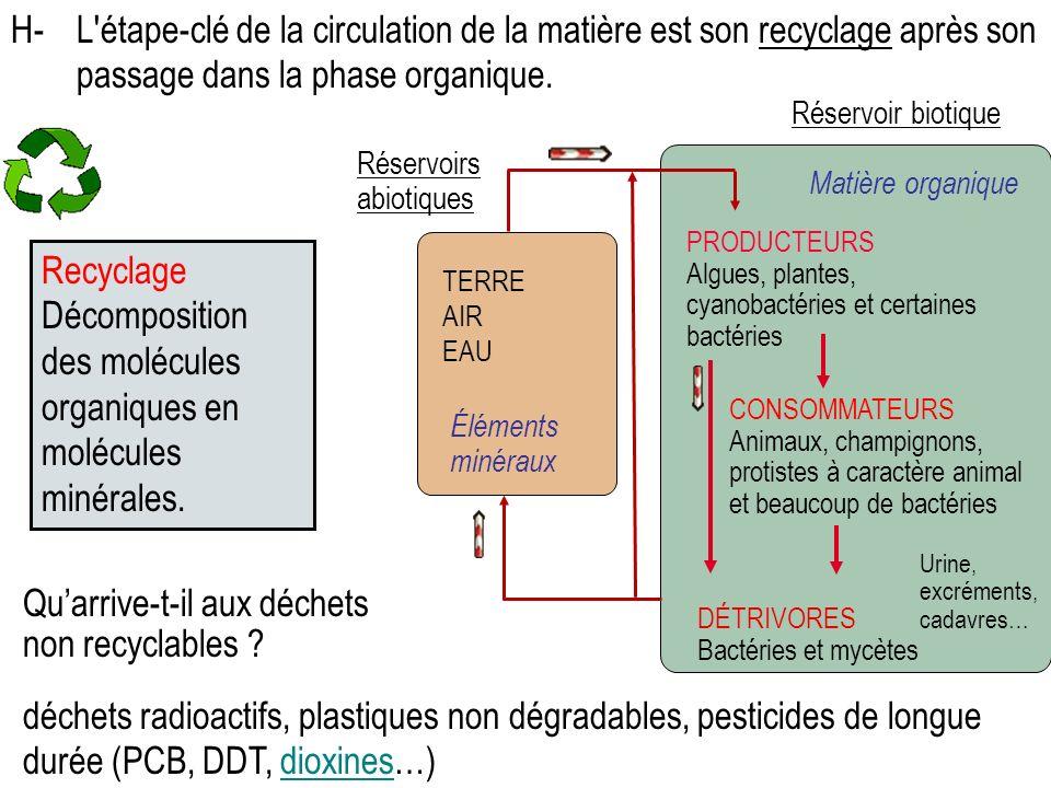 Décomposition des molécules organiques en molécules minérales.