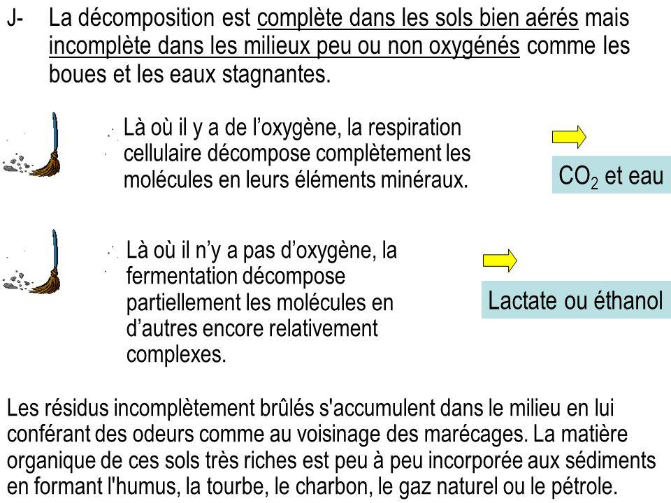 CO2 et eau Lactate ou éthanol