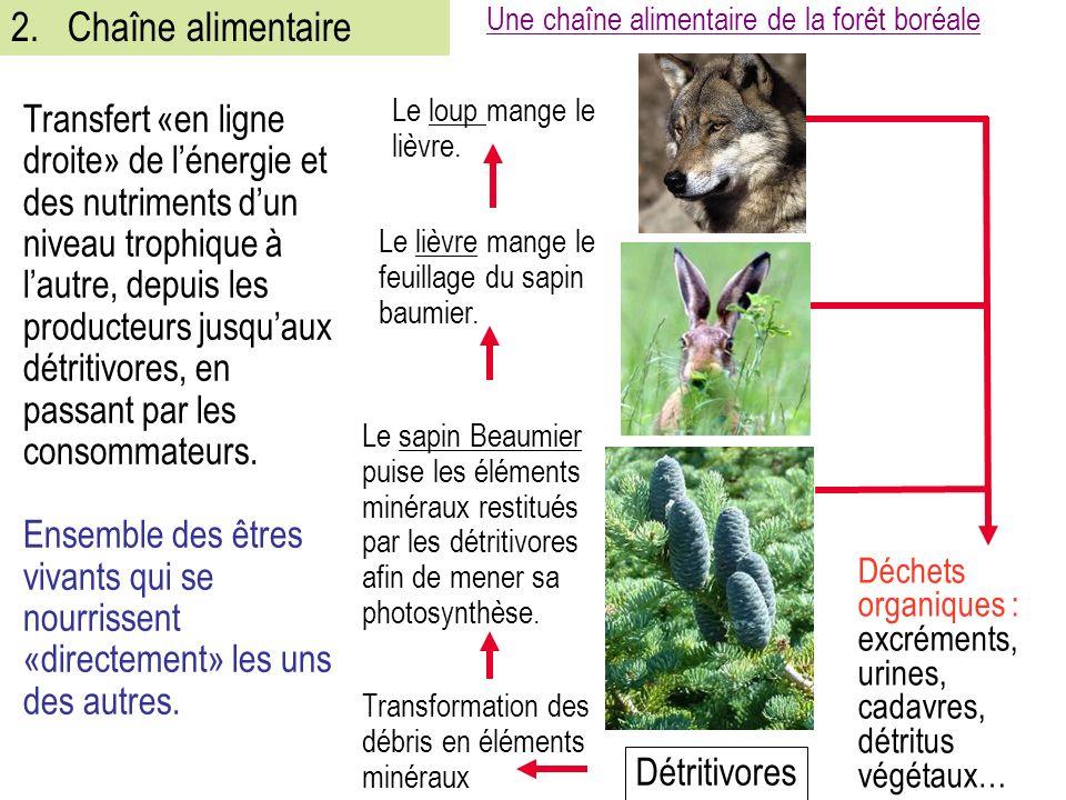 2. Chaîne alimentaire Une chaîne alimentaire de la forêt boréale.