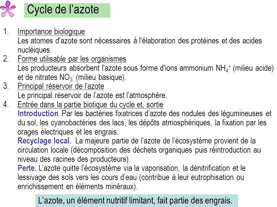 Cycle de l'azote Importance biologique Les atomes d azote sont nécessaires à l élaboration des protéines et des acides nucléiques.