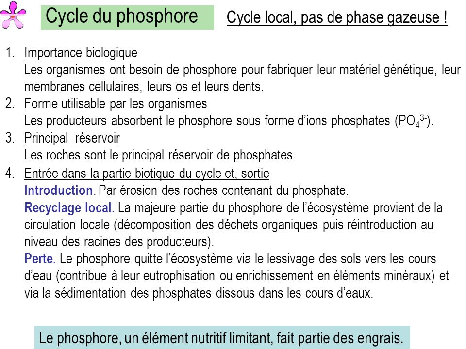 Cycle du phosphore Cycle local, pas de phase gazeuse !