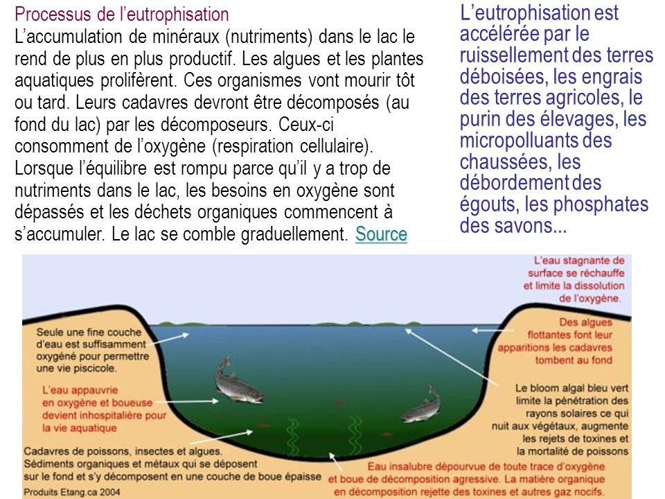 Processus de l'eutrophisation