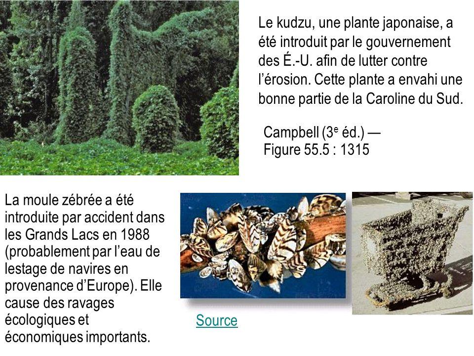 Le kudzu, une plante japonaise, a été introduit par le gouvernement des É.-U. afin de lutter contre l'érosion. Cette plante a envahi une bonne partie de la Caroline du Sud.