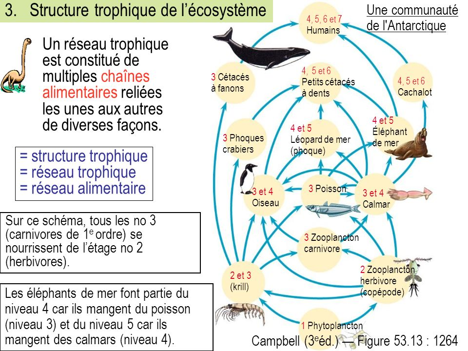 3. Structure trophique de l'écosystème