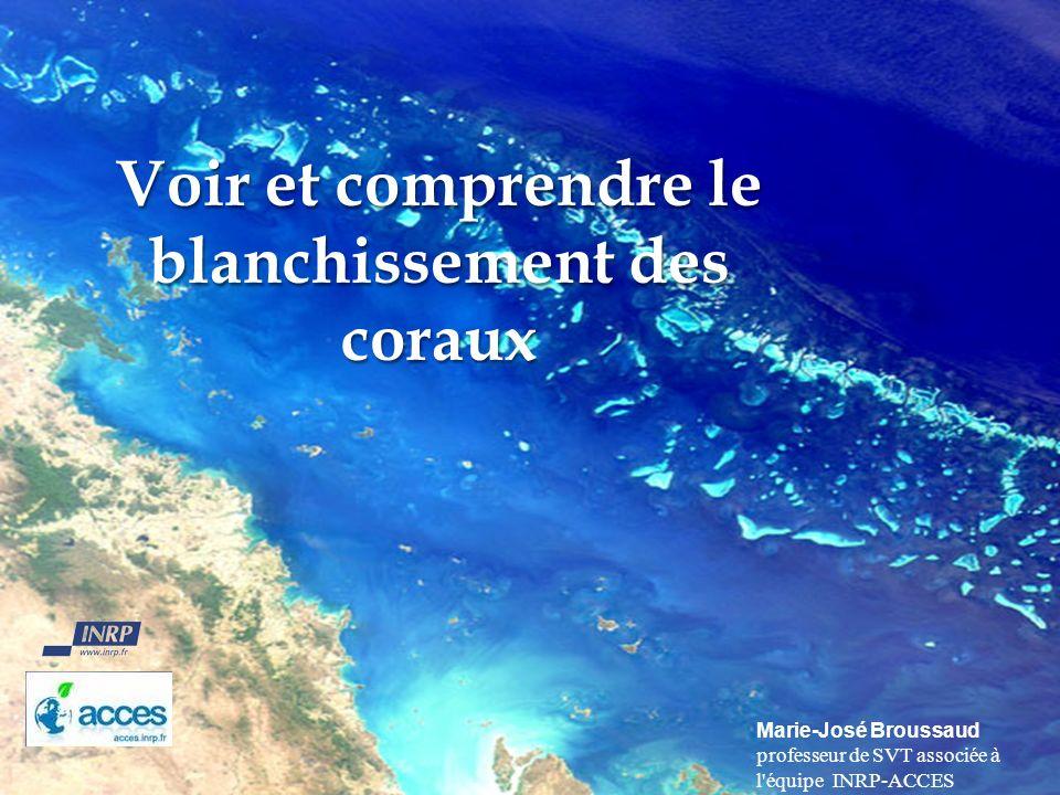 Voir et comprendre le blanchissement des coraux
