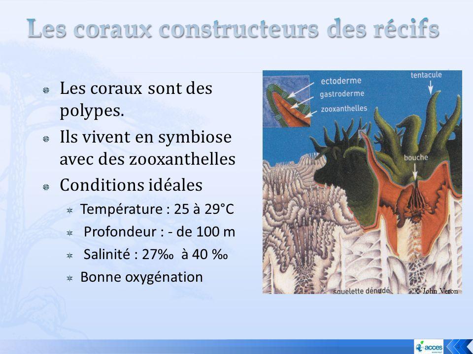 Les coraux constructeurs des récifs