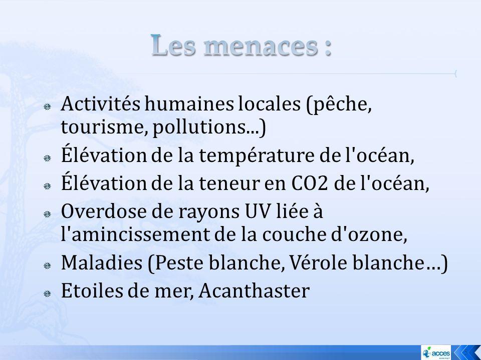 Les menaces : Activités humaines locales (pêche, tourisme, pollutions...) Élévation de la température de l océan,