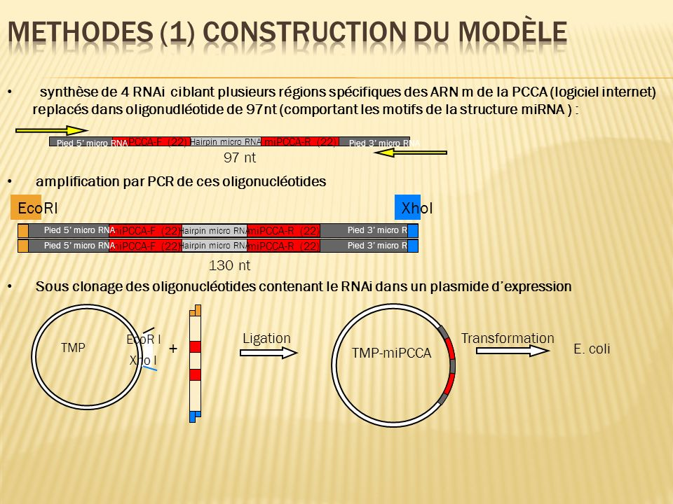 Methodes (1) construction du modèle