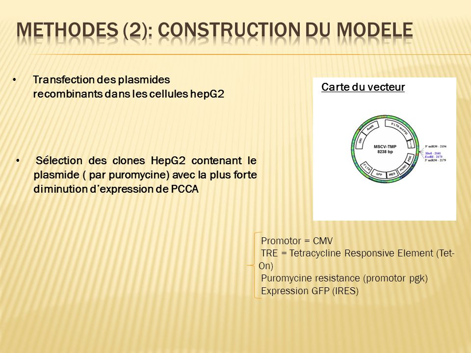 Methodes (2): construction du modele