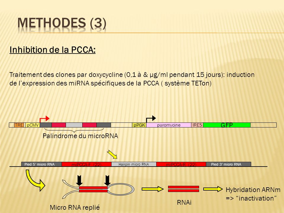 Methodes (3) Inhibition de la PCCA: