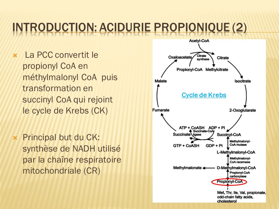Introduction: acidurie propionique (2)