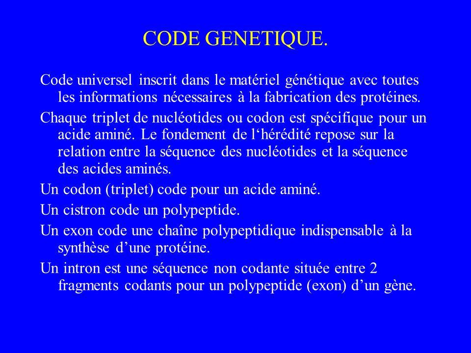CODE GENETIQUE. Code universel inscrit dans le matériel génétique avec toutes les informations nécessaires à la fabrication des protéines.