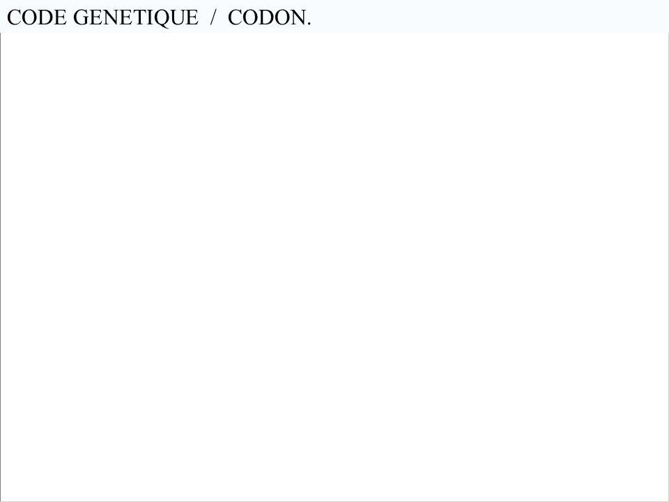 CODE GENETIQUE / CODON. En génétique, les codons sont des triplets de nucléotides (A-Tou U, C-G)