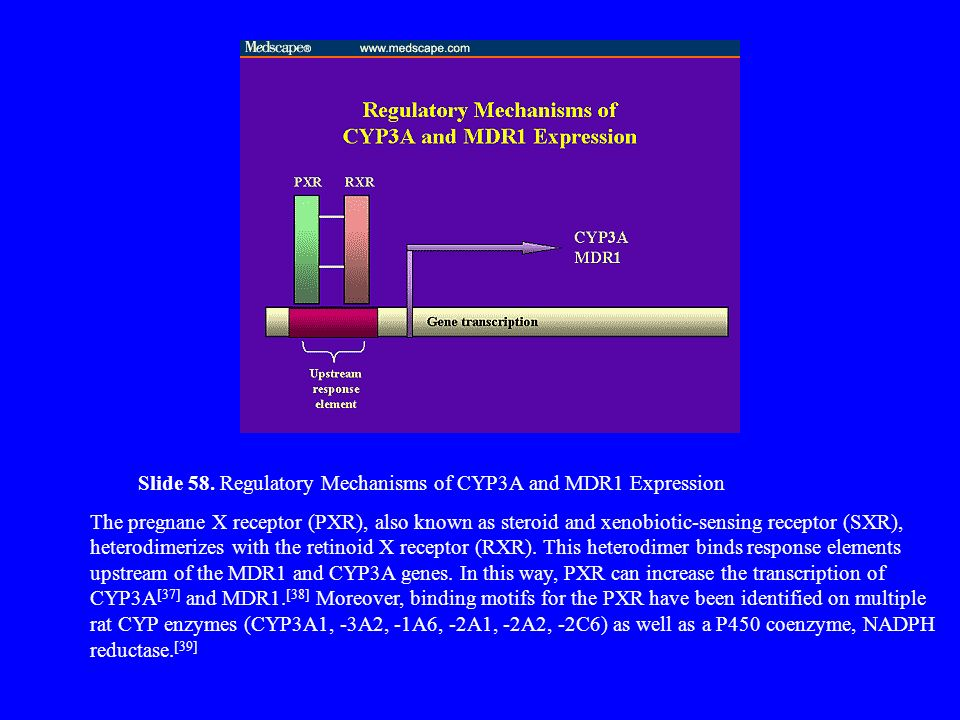 Slide 58. Regulatory Mechanisms of CYP3A and MDR1 Expression