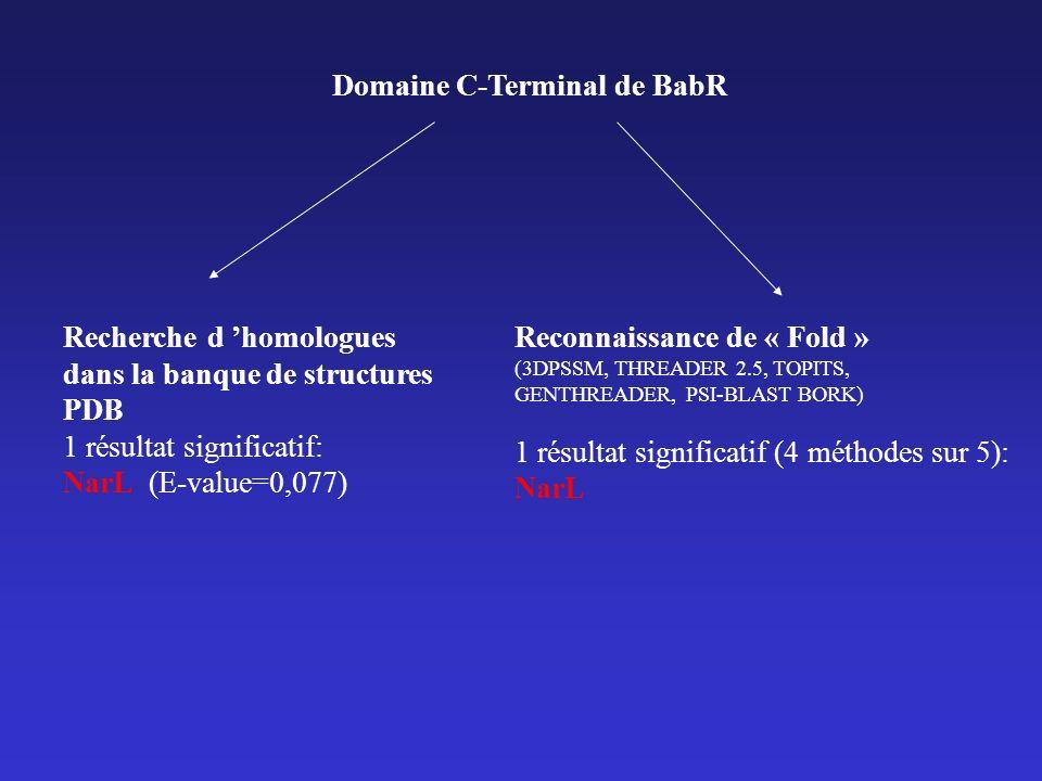 Domaine C-Terminal de BabR