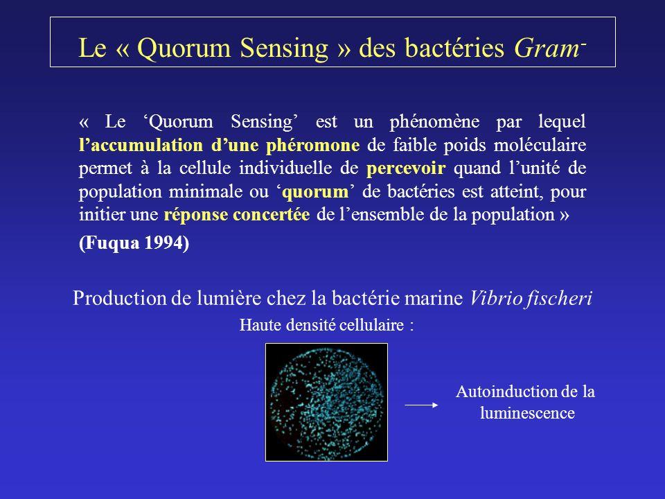 Le « Quorum Sensing » des bactéries Gram-