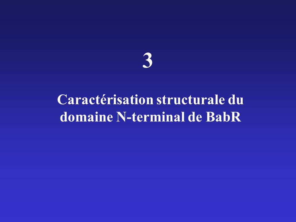 Caractérisation structurale du domaine N-terminal de BabR