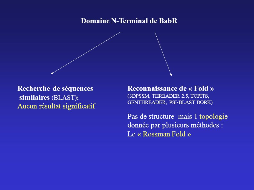 Domaine N-Terminal de BabR