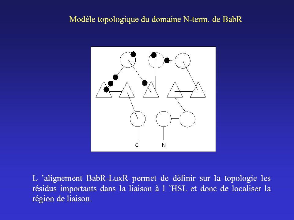 Modèle topologique du domaine N-term. de BabR