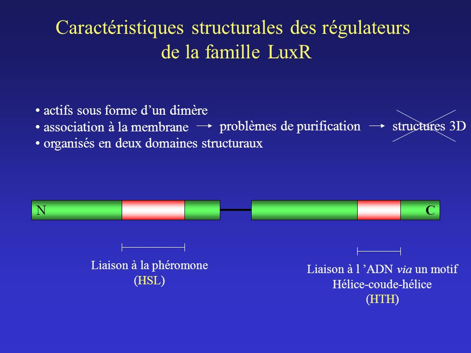 Caractéristiques structurales des régulateurs de la famille LuxR