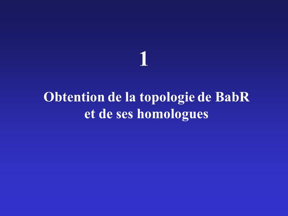 Obtention de la topologie de BabR et de ses homologues