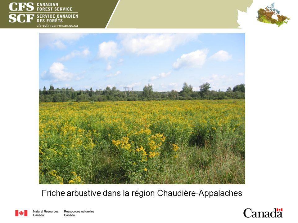 Friche arbustive dans la région Chaudière-Appalaches