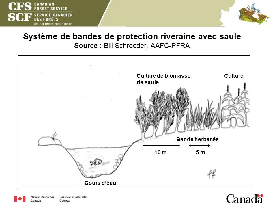 Système de bandes de protection riveraine avec saule Source : Bill Schroeder, AAFC-PFRA