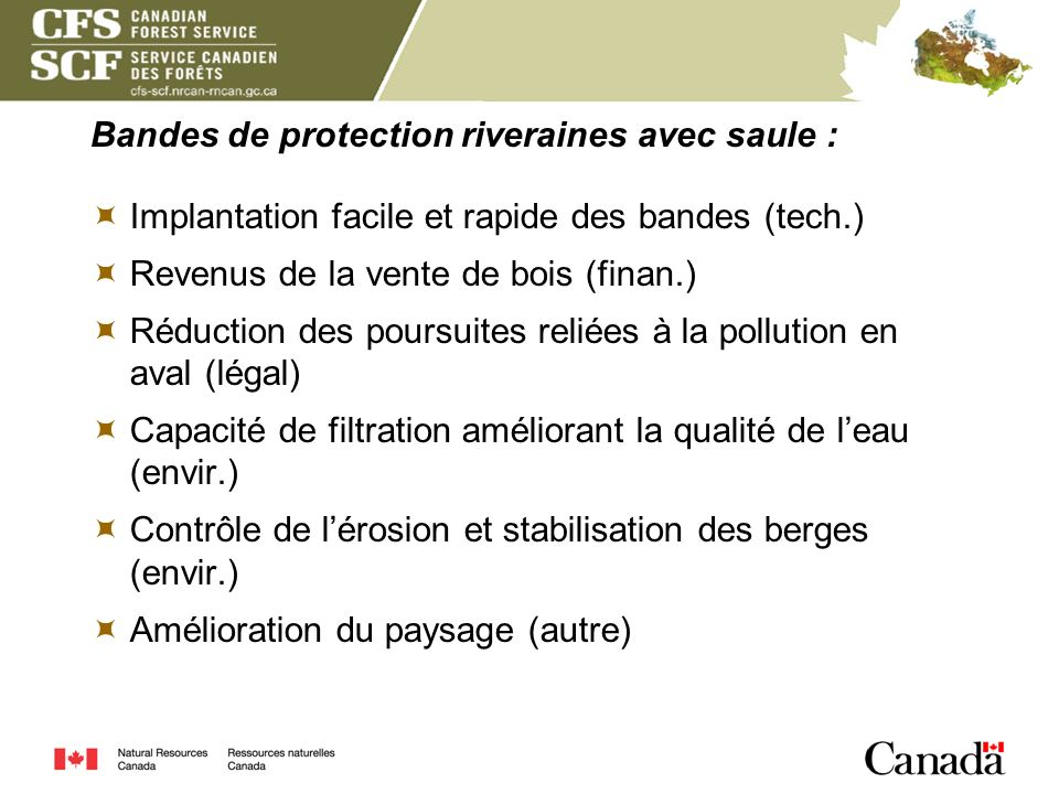 Bandes de protection riveraines avec saule :