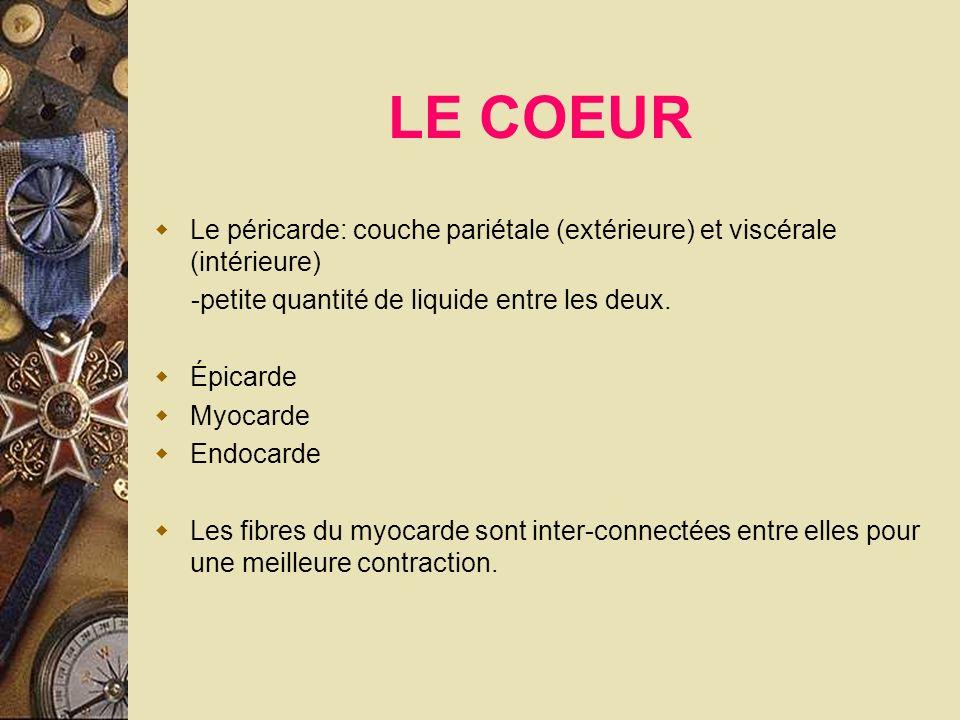 LE COEUR Le péricarde: couche pariétale (extérieure) et viscérale (intérieure) -petite quantité de liquide entre les deux.