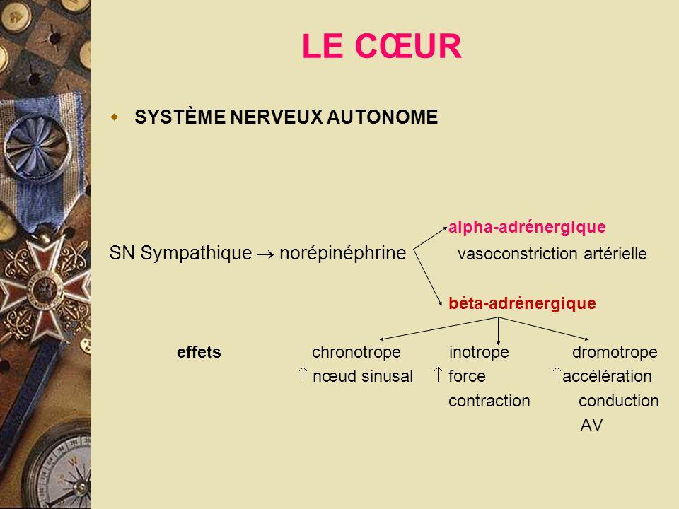 LE CŒUR SYSTÈME NERVEUX AUTONOME alpha-adrénergique