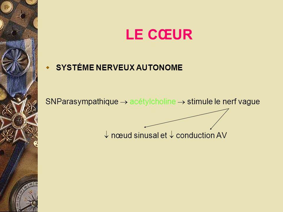 LE CŒUR SYSTÉME NERVEUX AUTONOME