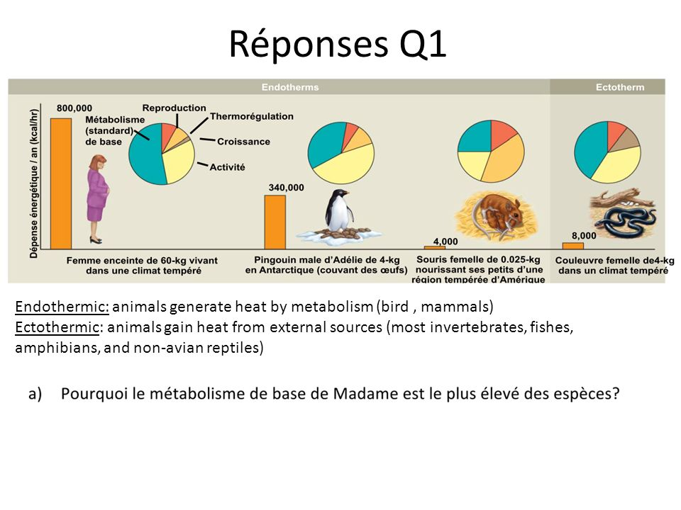 Réponses Q1 Endothermic: animals generate heat by metabolism (bird , mammals)