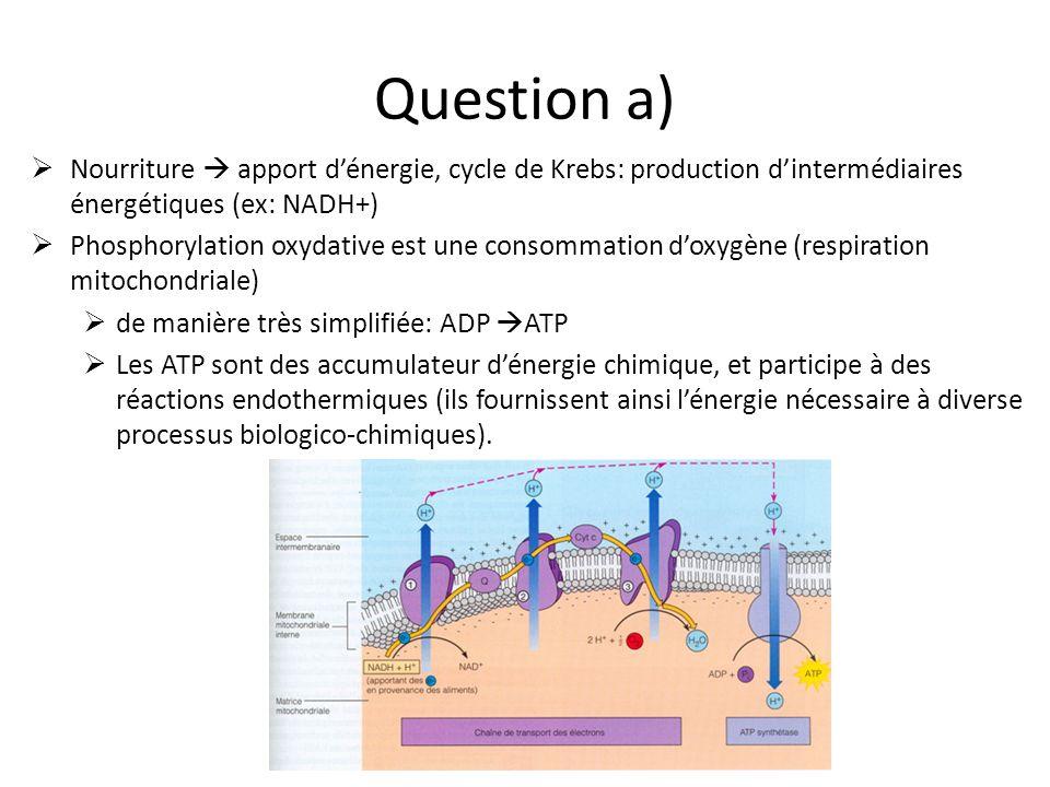 Question a) Nourriture  apport d'énergie, cycle de Krebs: production d'intermédiaires énergétiques (ex: NADH+)