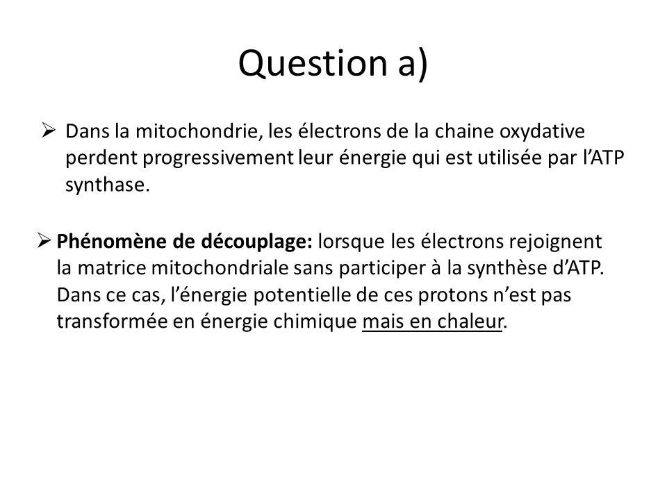 Question a) Dans la mitochondrie, les électrons de la chaine oxydative perdent progressivement leur énergie qui est utilisée par l'ATP synthase.